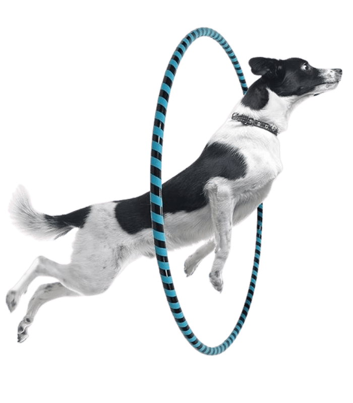 dog training - k9 training - dressage canin - Montreal / Vaudreuil