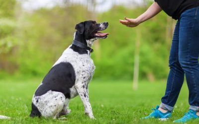 Dog Training 101 – The Most Important Skills For Your Dog